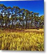 Florida Pine 3 Metal Print