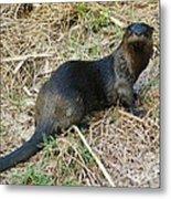 Florida River Otter Metal Print by Lynda Dawson-Youngclaus