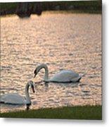 Florida Swans Metal Print
