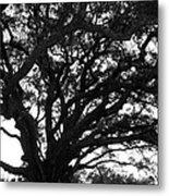 Florida Tree Metal Print