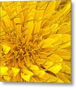 Flower - Dandelion Metal Print