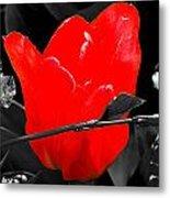 Flower 23 Metal Print