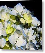 Flower 75 Metal Print