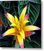 Flower And Leaves Succulent Metal Print