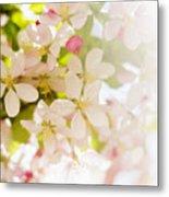 Flower Blossoms Metal Print