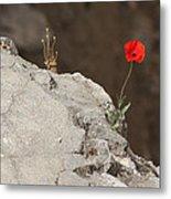 Flower By The Pool Of Bethesda - Israel Metal Print