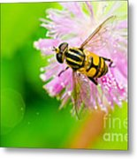 Flower Files On Flower Metal Print