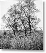 Flower Homage To The Trees Metal Print