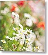 Flower Meadow Metal Print by Elena Elisseeva