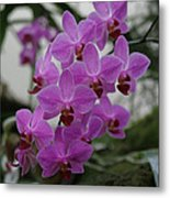 Flower Painting 0009 Metal Print by Metro DC Photography