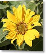Flower Painting 0010 Metal Print