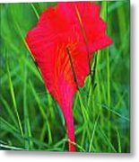 Flower Petal And Grass- St Lucia Metal Print