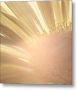 Flower Picture Metal Print