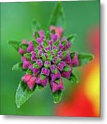 Flower Pop Metal Print