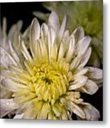 Flower Power Metal Print by David Taylor