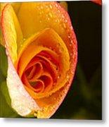 Flower Rieger Begonia 5 Metal Print
