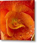 Flower Rieger Begonia 6 Metal Print