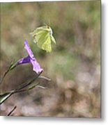 Flower Which Did Sway The Butterfly Flew Away Metal Print