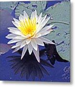 Flowering Lily-pad- St Marks Fl Metal Print