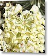 Flowers - 0053 Metal Print