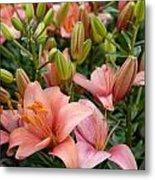 Flowers 385 Metal Print