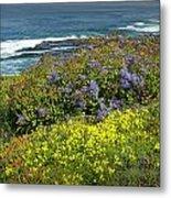 Flowers Along The Shore At La Jolla California No.0203 Metal Print