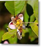 Flowers And Bees Metal Print