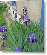 Flowers And Colors Of Taos Metal Print