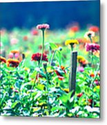 Flowers Everywhere Metal Print