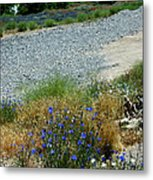 Flowers In The Gold Hill Desert Metal Print