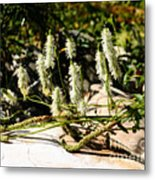 Flowers In The Sunshine Metal Print