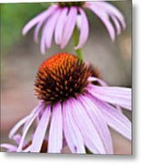 Flowers Metal Print by invisibleA