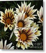 Flowers Of New Zealand 2 Metal Print
