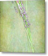Flowers Of The Grass Metal Print