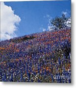 Flowers On A Hill Metal Print