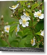 Flowers On The Fence Metal Print