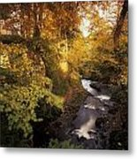 Flowing Water Through A Forest Metal Print