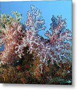Fluffy Brown, Pink And Red Metal Print