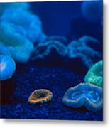 Fluorescent Corals Metal Print