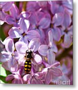 Fly In The Lilacs Metal Print