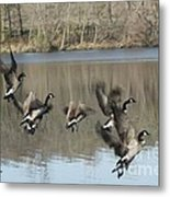 Fly Off For Water Metal Print by Yumi Johnson