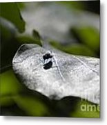 Fly On A Green Leaf Metal Print