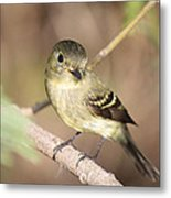 Flycatcher On A Branch Metal Print