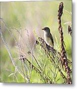 Flycatcher On A Twig Metal Print