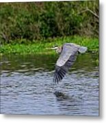Flying Across The St Johns Metal Print