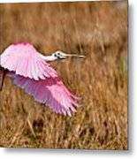 Flying Across The Wetlands Metal Print