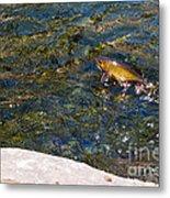 Flying Brook Trout Metal Print