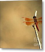 Flying Colours Metal Print by Vishakha Bhagat
