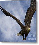 Flying European Sea Eagle I Metal Print