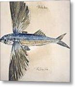 Flying-fish, 1585 Metal Print